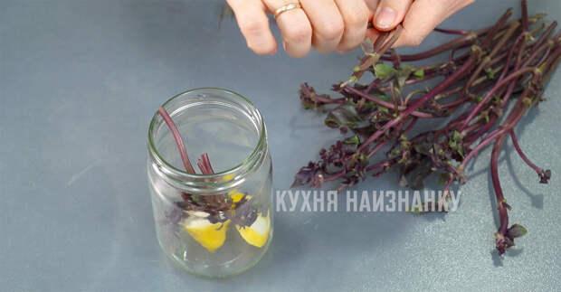 Базиликовый уксус Как я использую веточки базилика и обрезки лимона