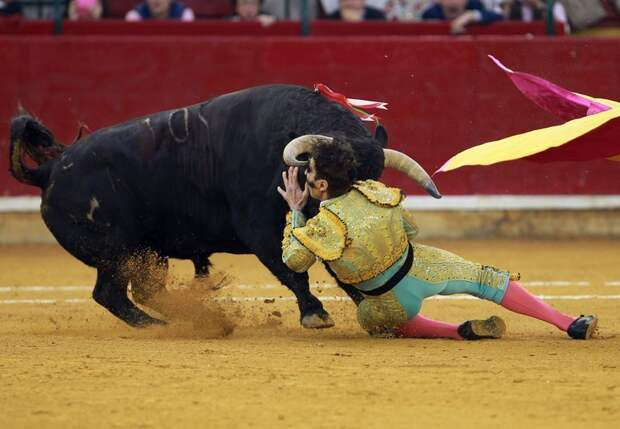 Хуан уже лишился одного глаза в 2011 году, когда бык проломил ему голову бык, в мире, животные, испания, коррида, матадор, скальп, травма