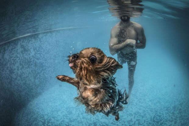 Как правильно плескаться в воде