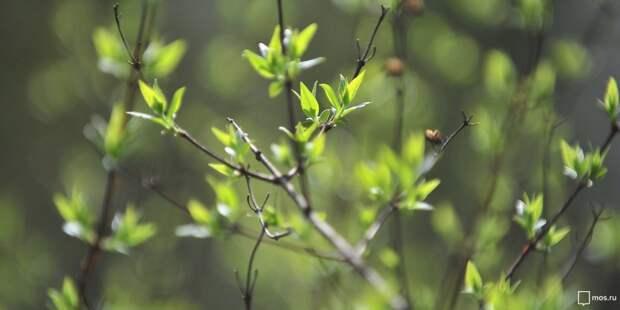 Территорию Хлебниковского лесопарка очистили от мусора