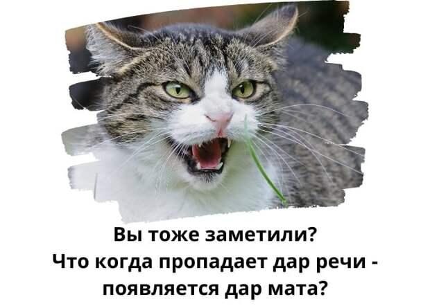 - Слушай, а ты можешь говорить о чем-нибудь другом, кроме пенсионного возраста?...