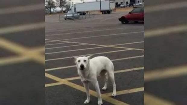 Брошенный пес на стоянке выл от горя 9 дней