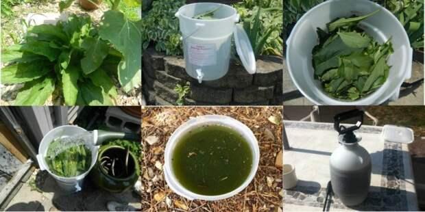 Приготовление натурального удобрения из настоя сорняков