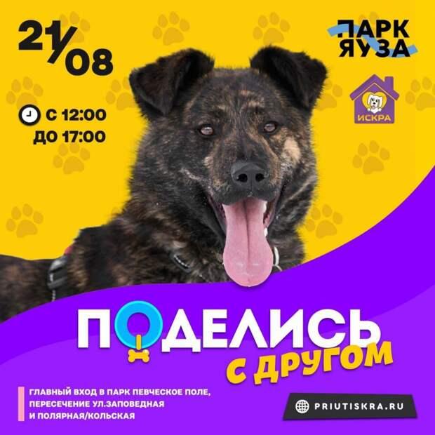 Приют для животных на Искры проведет акцию в поддержку бездомных собак