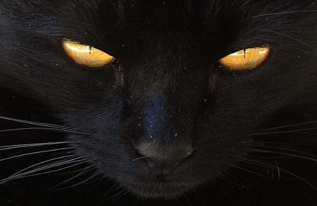 Кошачье проклятие