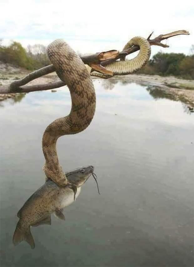 32. Змея с уловом животные, мир, подборка, природа, ужас, фото, явление