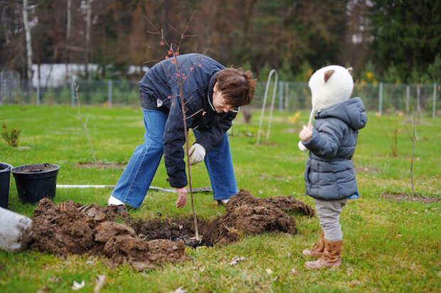 Лучшее время для посадки сада