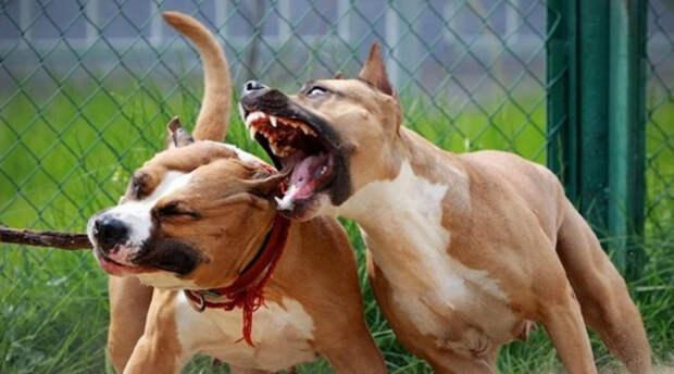 Собаки, укусы которых могут быть смертельными