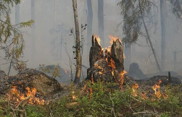 За посещение лесов Ялты будут штрафовать
