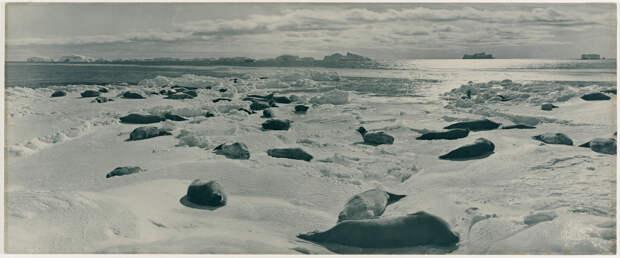 Первая Австралийская антарктическая экспедиция в фотографиях Фрэнка Хёрли 1911-1914 19