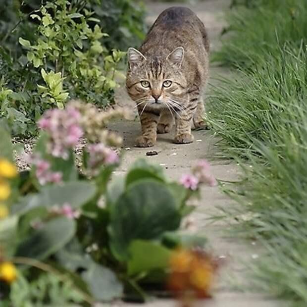 Как отпугнуть уличных котов от вашего сада