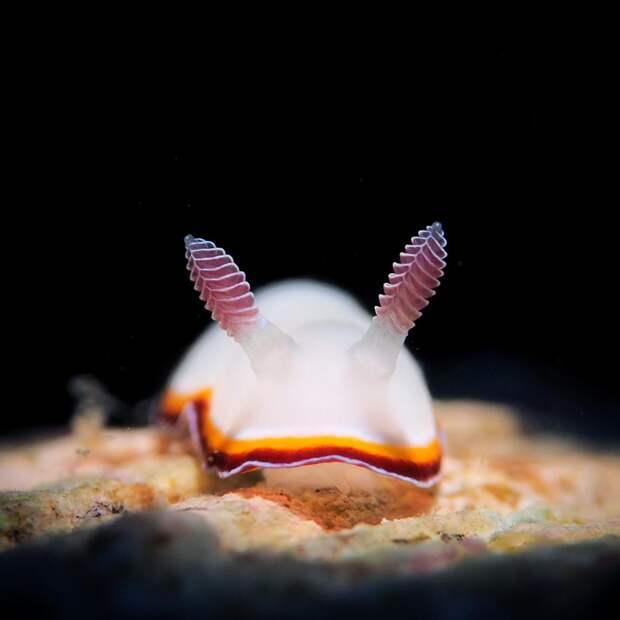 5 милых фото морских обитателей, которые похожи на обычных животных