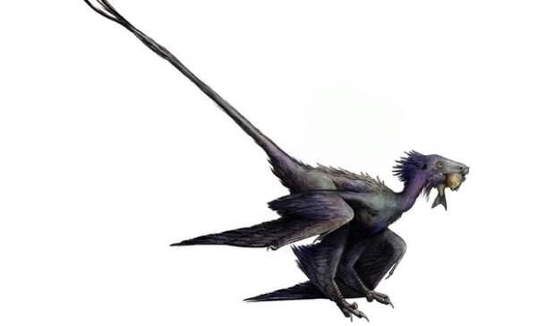 Обнаружен неизвестный науке вид летающего динозавра