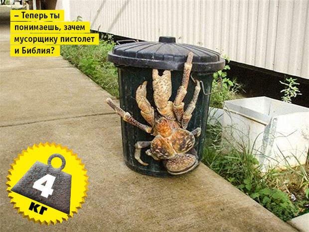 Фото №9 - Кто сказал «Вау!»: шокирующе огромные животные-переростки