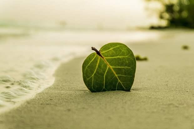Роспотребнадзор признал все пензенские пляжи непригодными для купания