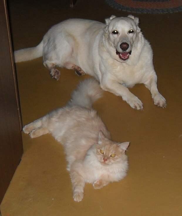 Хамура Кусаки. Борьба с жарой Кошка в доме, межвидовые отношения, собака