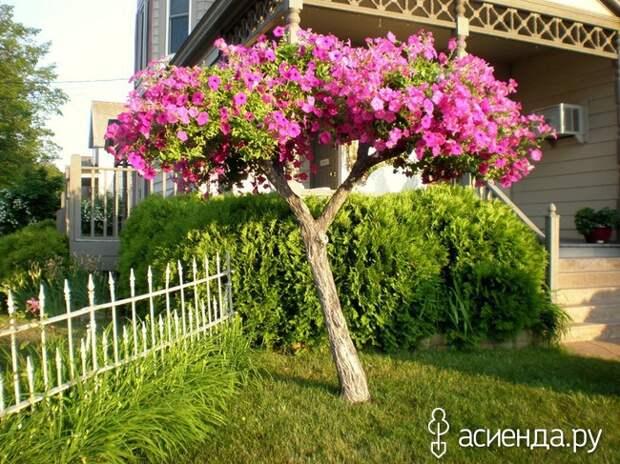 Супер-идея. «Деревья» из петуний