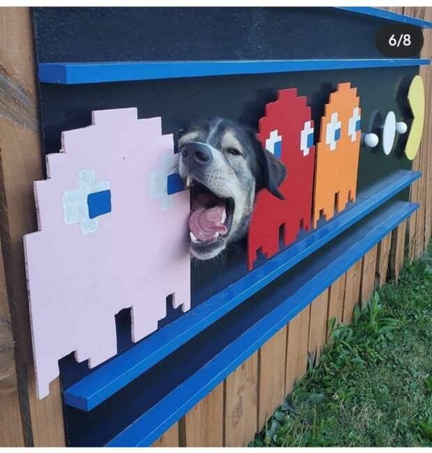 Как разнообразить собачью жизнь (и забор заодно)