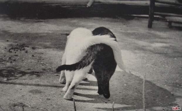 Котосеть