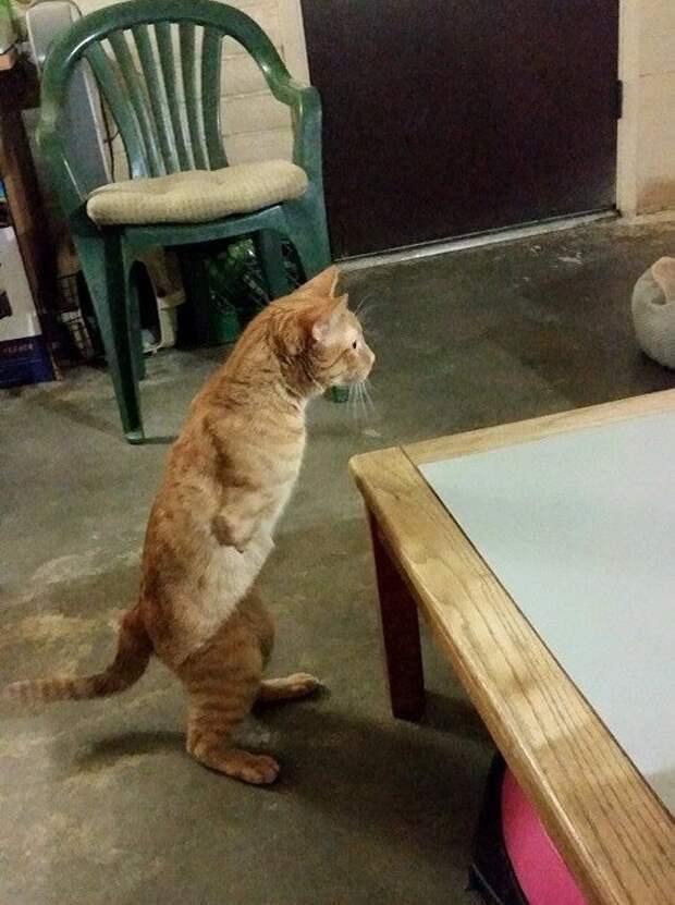 Рожденный лишь с двумя лапами кот смог выжить на улице!
