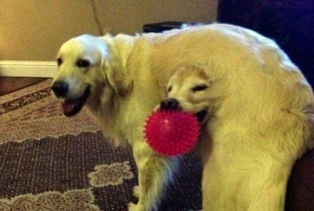 Кажется, один из псов застрял в текстурах.   Фото: Тутка.