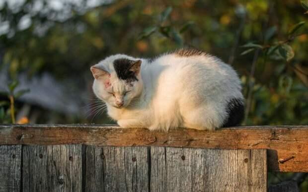 Спокойствие летнего вечера город, домашние животные, забор, кот, кошка, село, улица, эстетика