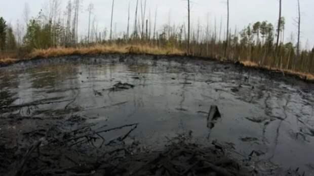 150 птиц погибли наСахалине внефтяном котловане неизвестного происхождения