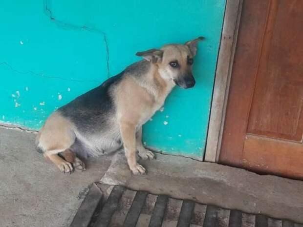 Собака ждет возле двери
