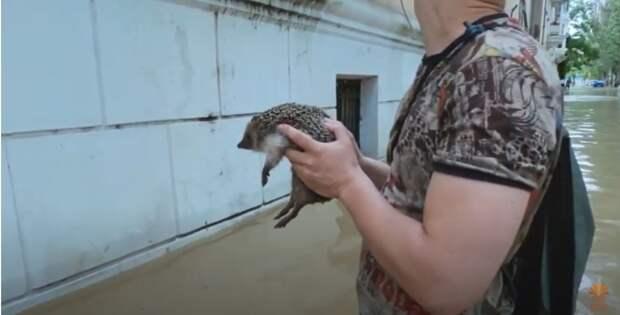Спасение маленькой жизни от страшной силы стихии: в Керчи во время потопа спасли ёжика
