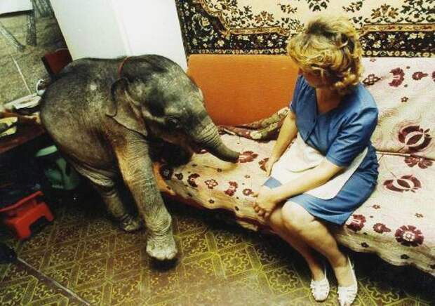 Слонёнок в одесской квартире — такого вы еще не видели!