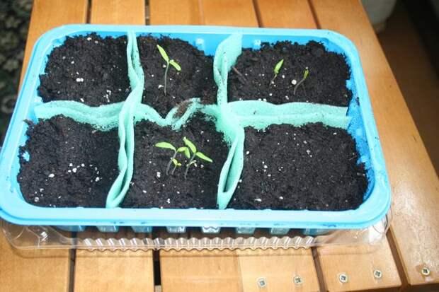 Экономно: посевные емкости с ячейками