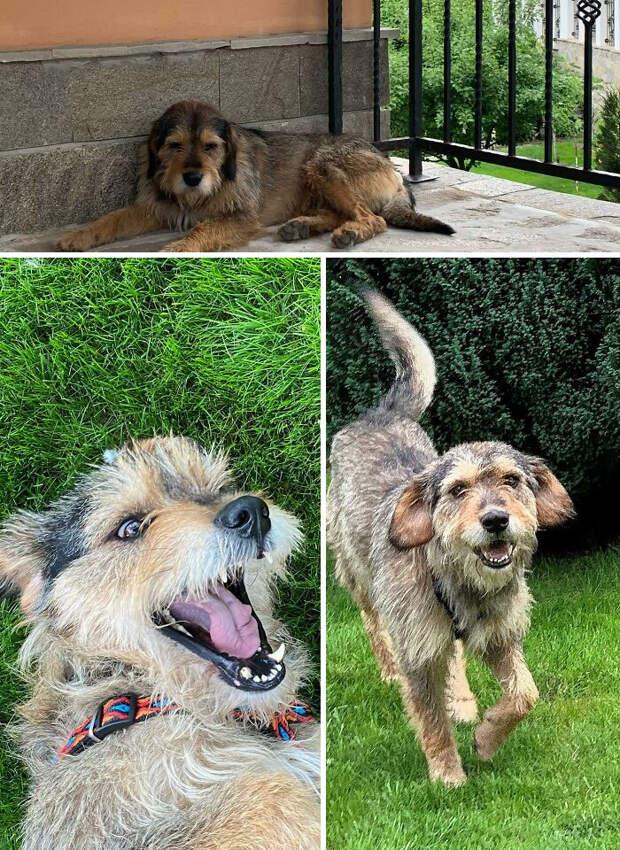 15 собачек до и после того, как их взяли в дом, и жизнь наконец-то перестала быть собачьей
