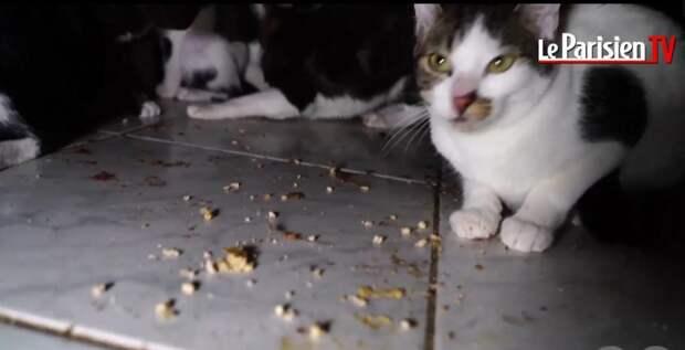 В Париже из гниющей квартирки неадекватной женщины освободили 130 котов