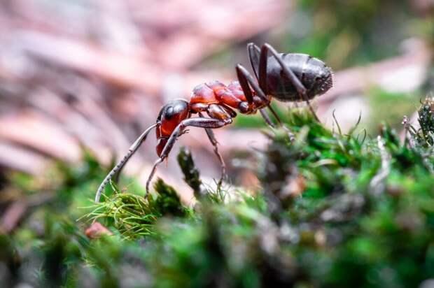 В Дубае открылся «ресторан для муравьев» и вызвал ажиотаж у «посетителей»