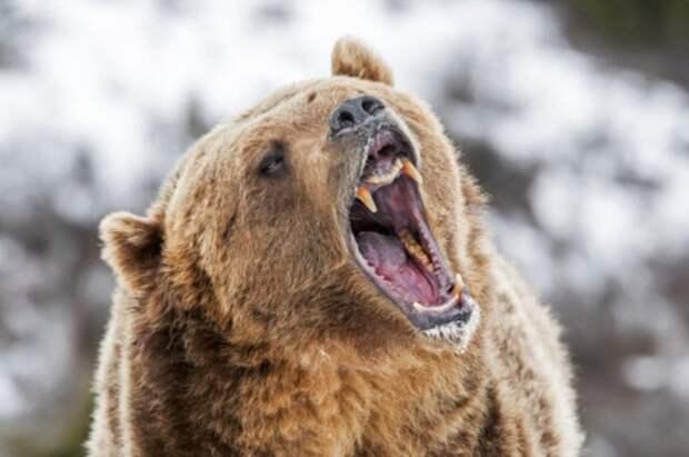 Не надо дразнить медведя