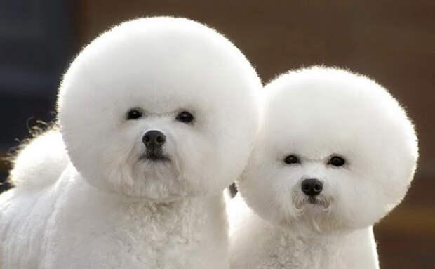 Животные-близнецы - 25 очаровательных фото-1