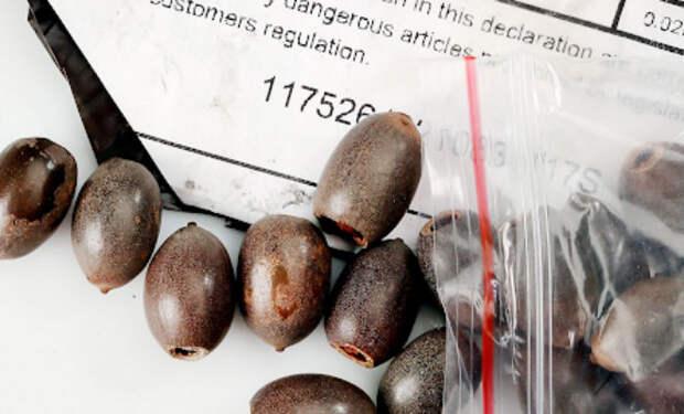 Сотни людей в разных странах получили странные семена из Китая и только одна женщина решила посадить их и посмотреть, что вырастет