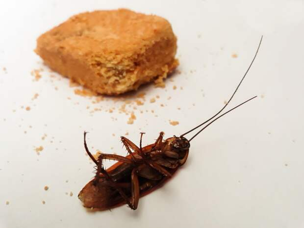 Тараканы атакуют: россиян предупредили о скором нашествии незваных «гостей»