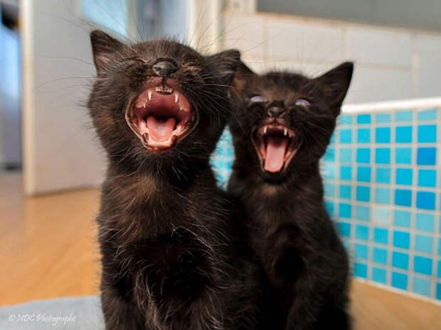 Животные-близнецы - 25 очаровательных фото-9