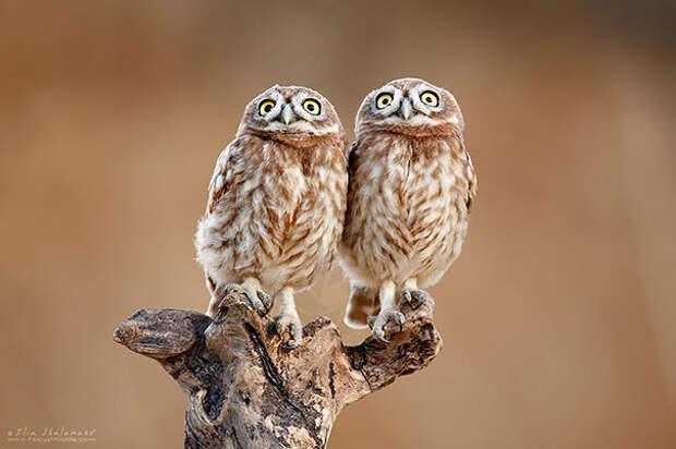 Животные-близнецы - 25 очаровательных фото-05