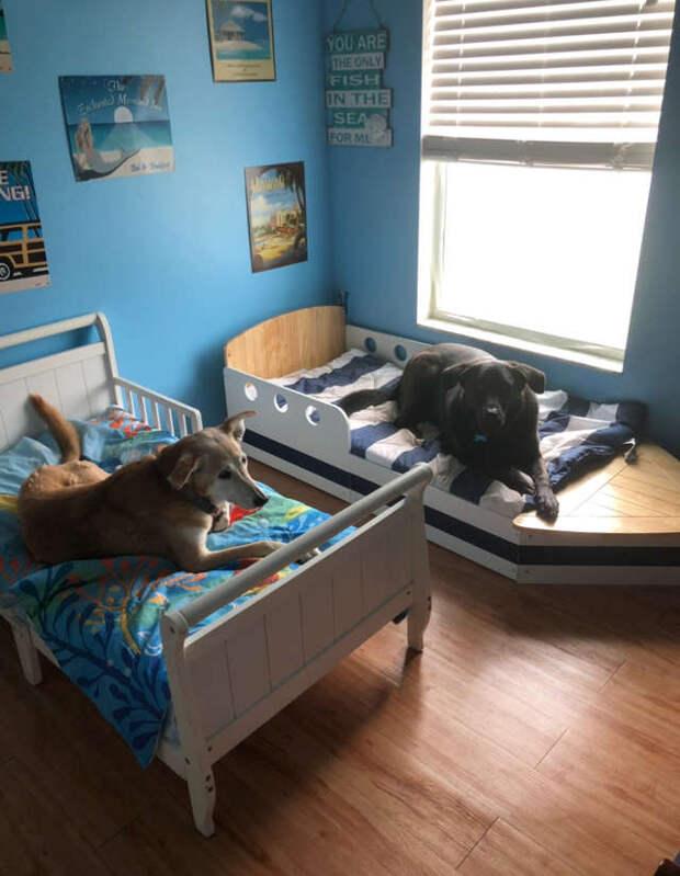 две собаки на отдельных кроватях