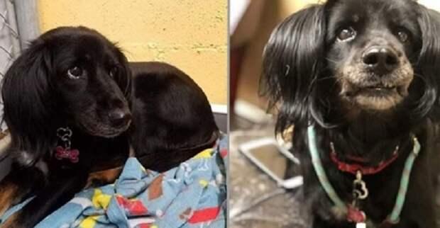 История собаки с разбитым сердцем: знакомьтесь, бордер-колли, по кличке Джесси
