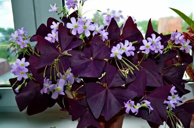 Умелый акцент: 5 растений с необычной расцветкой листьев, которые выглядят дорого даже в невзрачном горшке