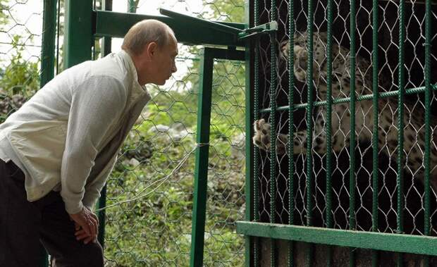 Владимир Путин у клетки леопарда в заповеднике Сочи.