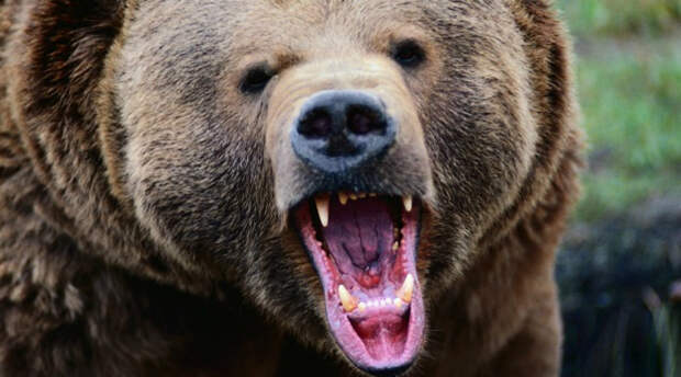 Встреча с медведем в лесу: как себя вести