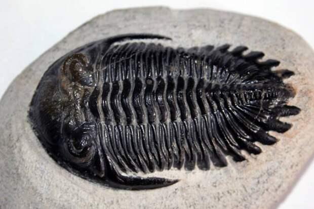 Самые необычные из древнейших живых существ