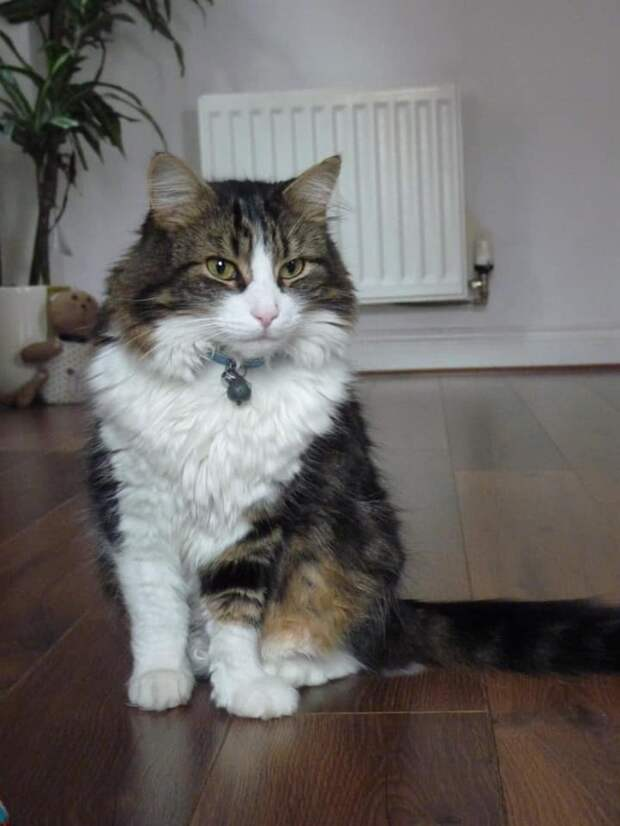Почти как в «Кладбище домашних животных» Стивена Кинга: кремированный кот вернулся домой