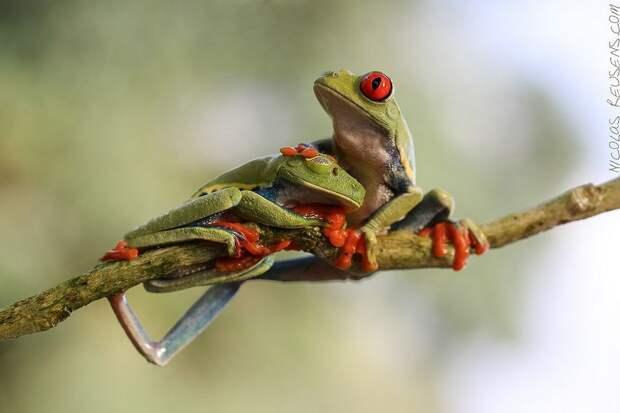 Frogs14 Оригинальные лягушки