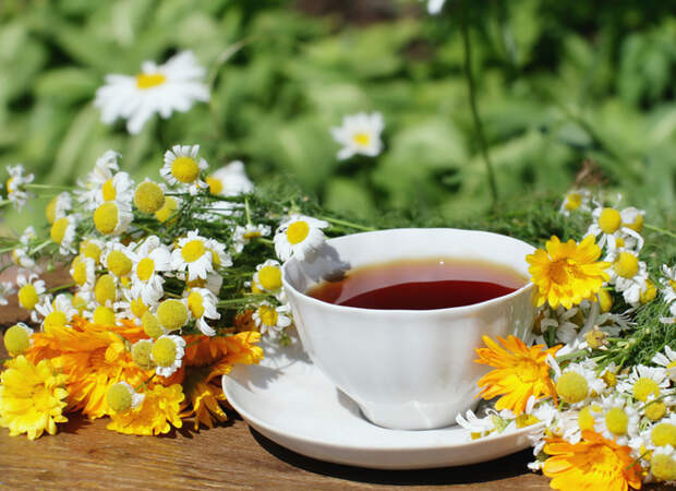 Травы для чая: что собирать и как заваривать ароматные напитки