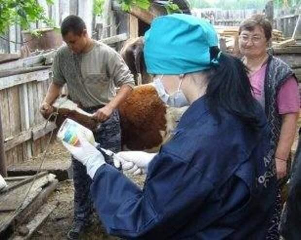 В Иркутской области от лептоспироза привьют 120 тысяч сельскохозяйственных и мелких домашних животных